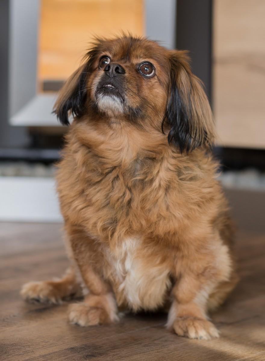 Portrait: Lucky Schöller, Wachhund